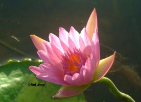The Lotus of Strength by GreenNexus51