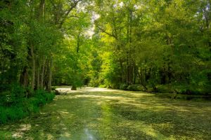 Greenbriar Swamp HDR by joelht74