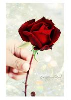 . . The only rose . . by Exceptional-Mind