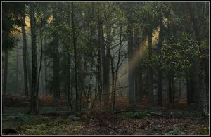When the sun enters the forest by jchanders