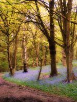 Trees in Bluebell Wood by jenny4
