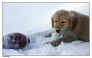 Puppy Expression - Playful by MysteriousTremendum