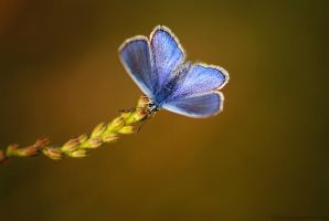 Blue wings by Samantha-meglioli