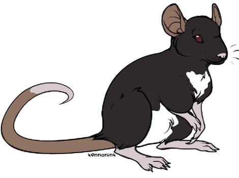 Shiiro my rat by atilfunami