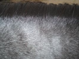 Blue Roan Color by sychoblustock