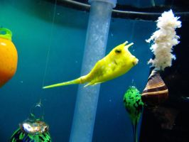 Fish 18 -- Sept 2009 by pricecw-stock