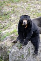 I'm a bear but I did not annex Crimea by NB-Photo