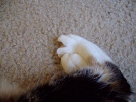 Kitty feets by Gizmo-The-Freaky