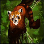 Red Panda by WolfHearts