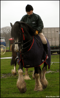 Shire Horse Show: Ridden 16 by ladyepona