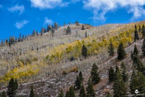 Autumn Colors and First Snow by mjohanson
