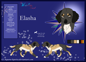 Elasha_Model-sheet by Aquene-lupetta
