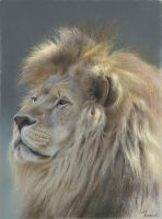 The king : Pastel pencils and pastel on pastelmat by wimke
