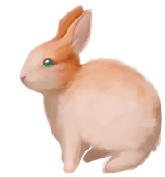 Rabbit by Helix-Wing