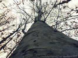 365 Project-Day 61: Old Tree by hourglass-paperboats