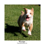 Woopy by Tepara