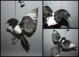 Magpie Mount Flying without Base by CabinetCuriosities