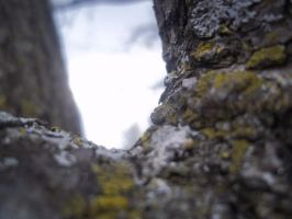 A Tree's Perspective 5 by invaderjanie