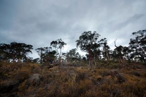 The bush at Mundaring, Western Australia by DeviantRae