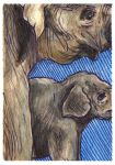 Wrinkles and Lines ACEO by AshleighPopplewell