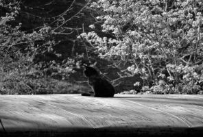 Cat on roof by dysphoriah