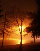 Tree On Foggy Night by Sol-Vector