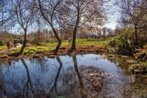 Snir Stream by ShlomitMessica