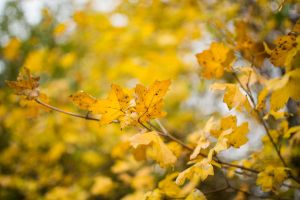 Autumn leafs by PJohnny