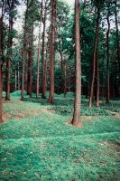 Trees in the forest by PhotoTori