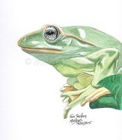 Fea's Tree Frog by DragonsDust