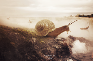 The Snail by leebo-zing-ddh