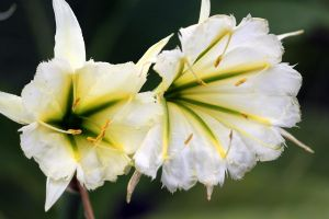 White Green Yellow by CASPER1830