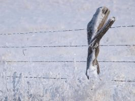 snowy fence 24 by fotophi