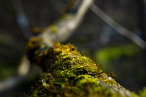 Moss on a branch by sulevlange
