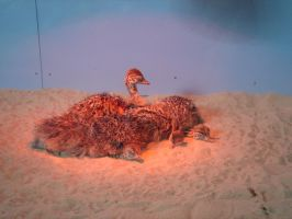 Baby Ostriches at Cal Academy by topace12