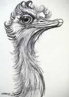 Ostrich With Attitude by HouseofChabrier