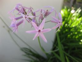 Flower 081414 02 by acurmudgeon