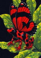 Red Poison Fairy Frog by TabLynn
