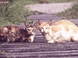 Two Cats by zanelina