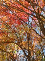 Painted trees and coloured leaves by kaikaku