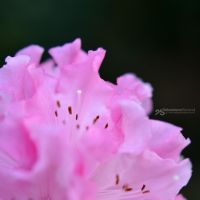 crumpled pink by akthuro
