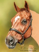 Goldi-Horseportrait-Pastell-WIP-2 by AtelierArends