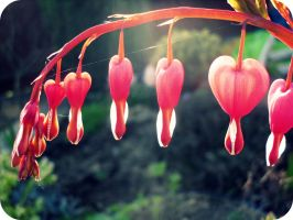 Bleeding Hearts by Drop-Dead-x