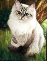 Siberian Cat by Meorow