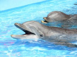 Dolphins by Feather-wolf