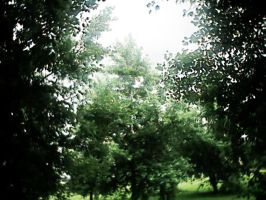 Green green Leaves by pattsy