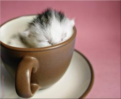 a cup of cat4 by ladyysparrow