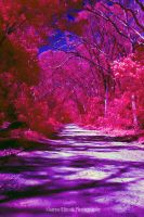 Country Road IR by Sminott