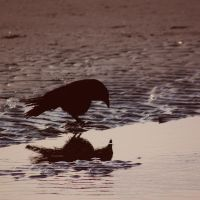 The crow who saw itself by 1Mathew7