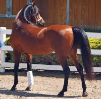 horse stock 11 by Jumper4Jesus88